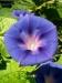 Květ :-)
