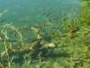 Průzračná voda svádí k rybolovu