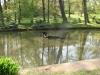 Rybníček v prostorách zámecké zahrady