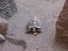 Želva pardálí
